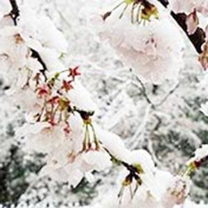 春も気を付けたい『融雪剤と凍結防止剤』
